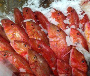fish-727222_1280